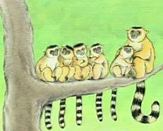 Charmin Lemur
